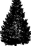 Живо дърво за Коледа