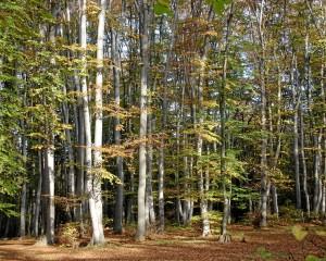 Природен парк ''Шуменско плато''