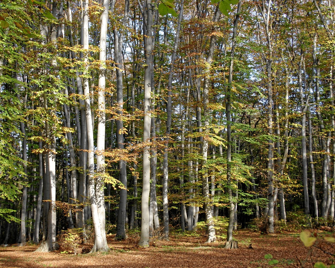"""""""Шуменско плато"""" – европейски парк за туризъм"""