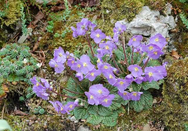 Цвете, бръмбар и скали, набори на динозаврите, са само част от непознатите чудеса на Северозападна България