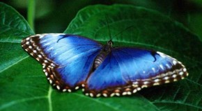 Екзотични живи пеперуди завладяха Бургаския природонаучен музей