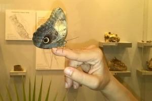 Щастливо знамение е пеперуда да кацне върху ръката ви! снимка: DarikNews.bg