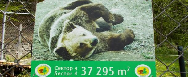 Танцуващите мечки в Белица ще се радват на повече внимание