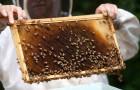 Финансова помощ за пчеларите в размер от 45 хил. лева.