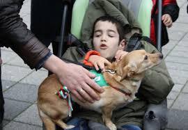 Тами-първото куче терапевт от приют в България