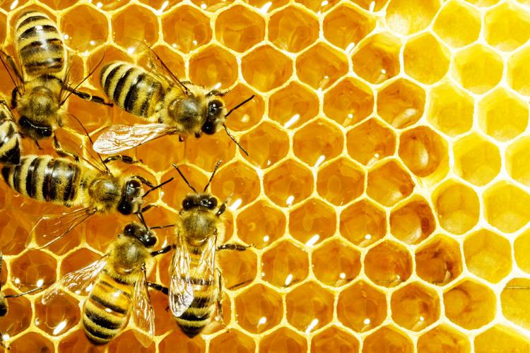 Българи разработват алтернативен метод за стабилизиране популацията на пчелите