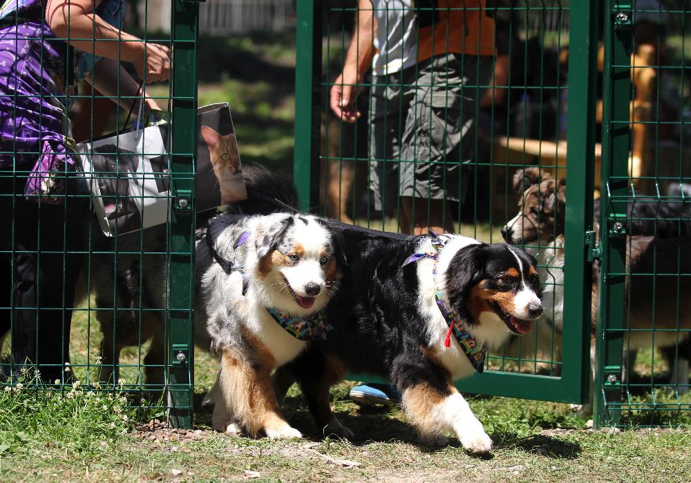 Нов кът за кучета беше открит в столичния Южен парк