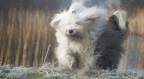 Куче-терапевт помага на болни деца от Пловдив