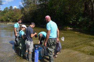 преместване на защитени видове риби