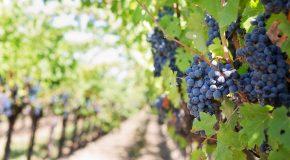 Виното от Тракийската низина на второ място в престижна класация