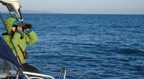 Граждани могат да се включат в мониторинга на биоразнообразието на Черно море