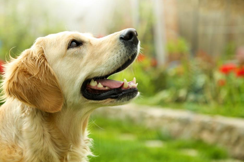 За първи път в България ще се обучават кучета в помощ на хора с увреден слух